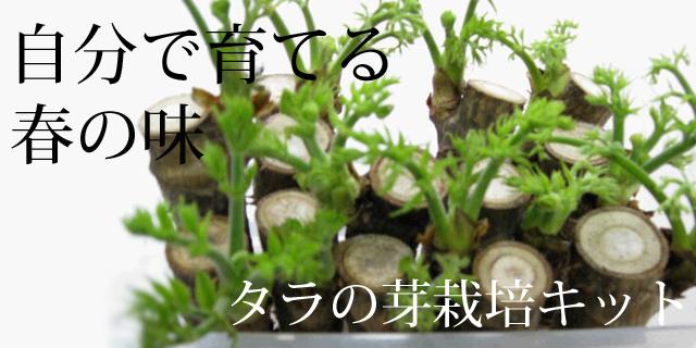 タラの芽栽培キッドヘッダー