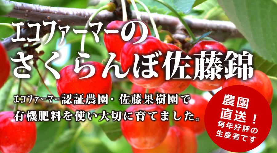 エコファーマーのさくらんぼ佐藤錦